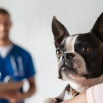 24 hour vet clinic singapore