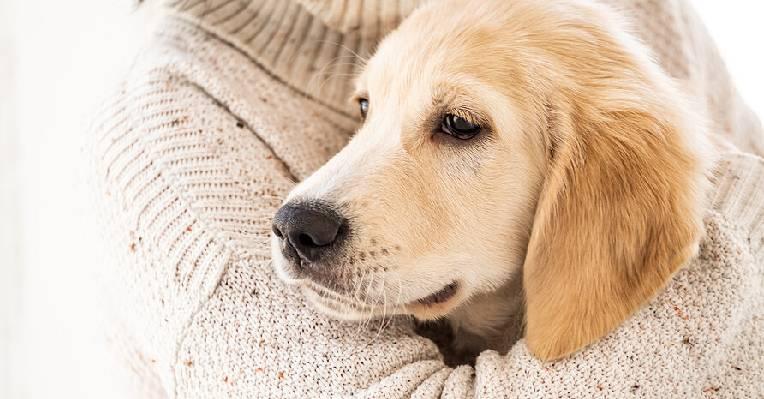 dog insurance singapore