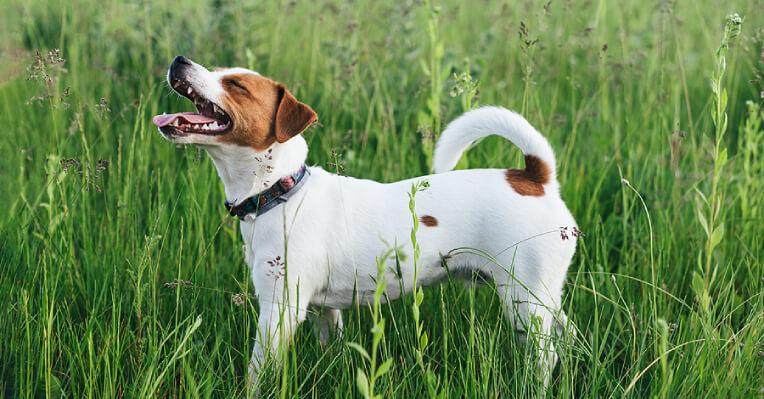 Veterinary Tips, Pet Adoption Service