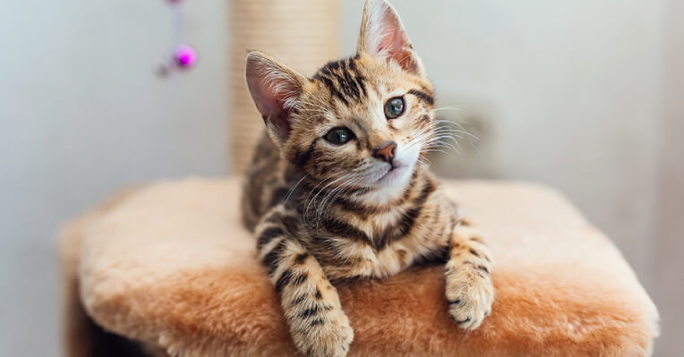 Cat Vet, Pet Adoption Service