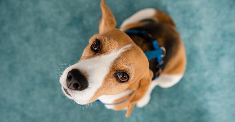 Basic Grooming For Dogs, Basic Grooming For Dogs Singapore