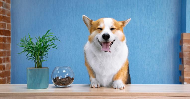 Dog Boarding House, Pet Boarding Facility