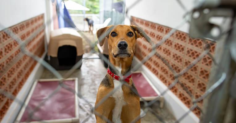 Pet Adoption Service, Pet Adoption Service Singapore